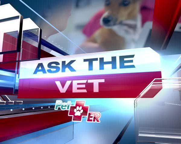 Ask The Vet- Adding to the family_20160721143502