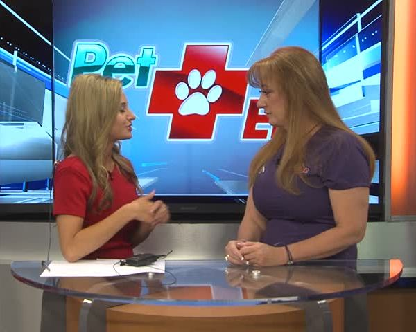 Ask the Vet- Taking pets on vacation_20160707183004