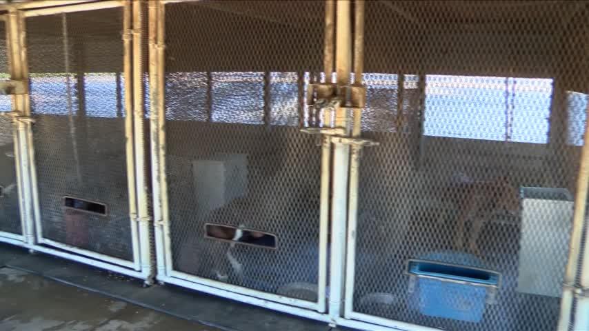 Dog Dies in Animal Control Custody_57131278-159532