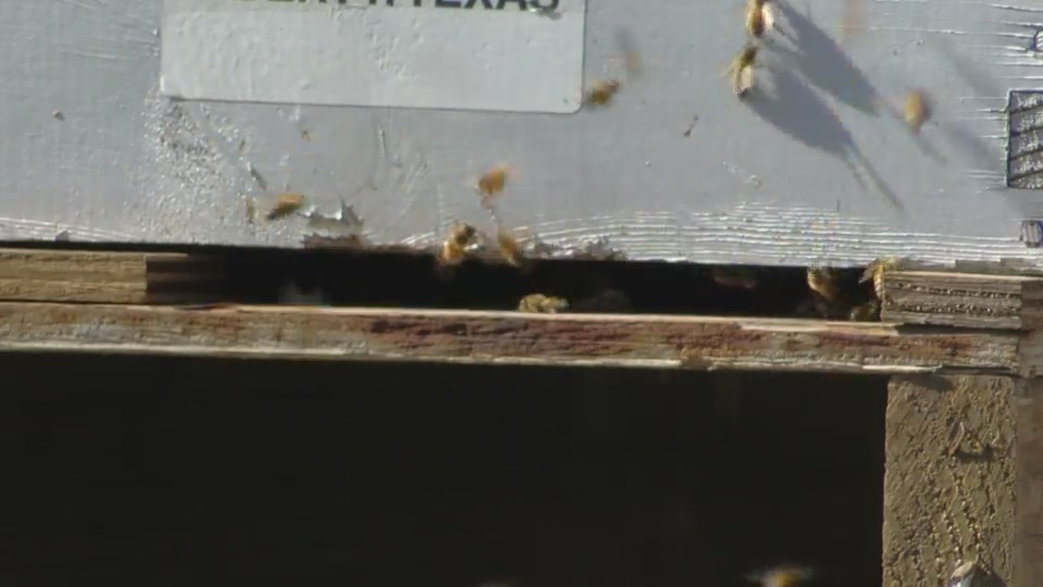 Preventing beehive thefts in the Valley