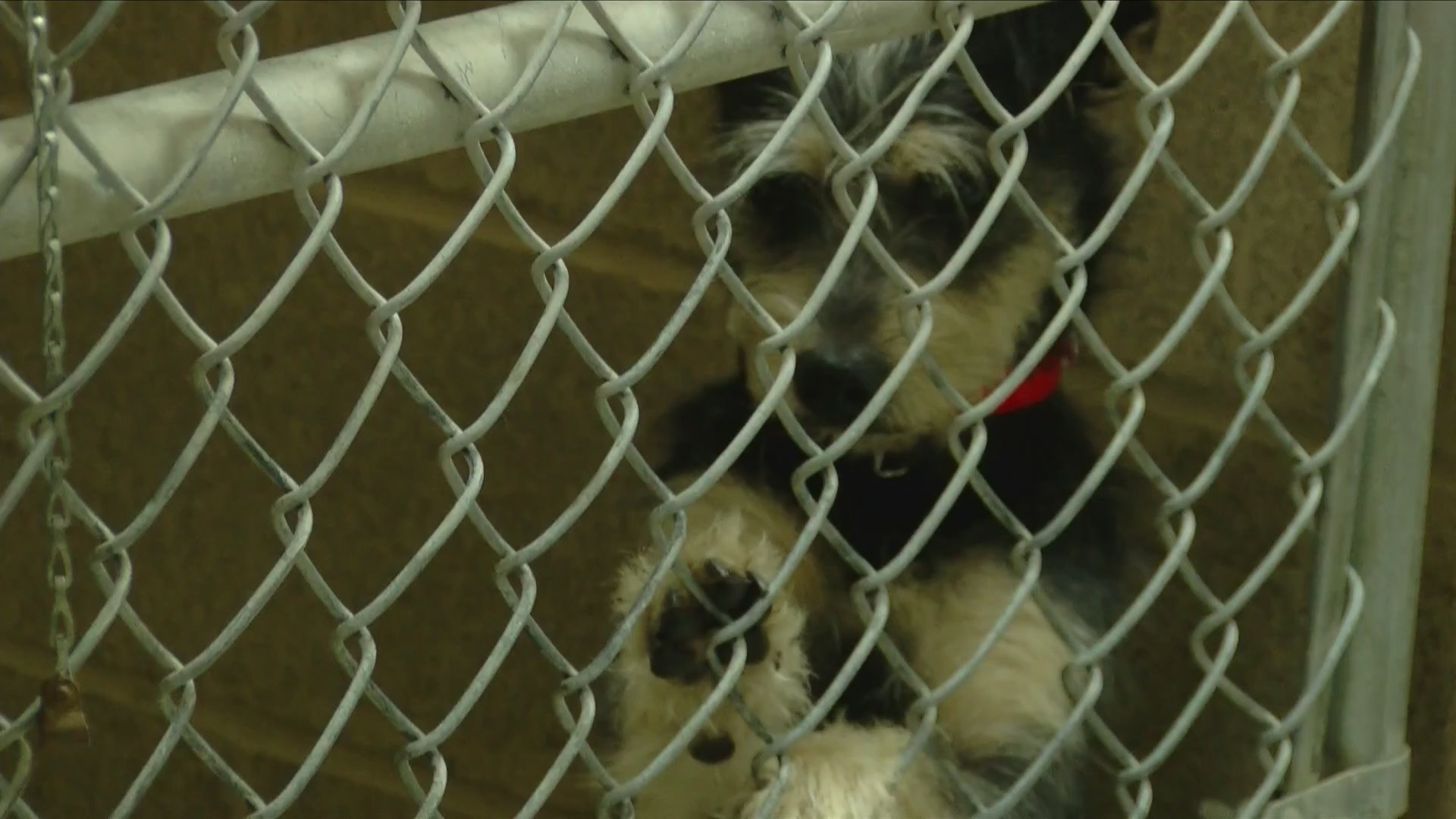 Clear the shelters and help a pet find a forever home