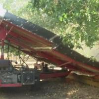 Groundbreaking new tool for pistachio growers
