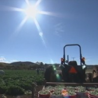 Proposal could pave pathway to citizenship for farmworkers