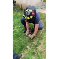 Kitten_Rescue_4_20190226234103