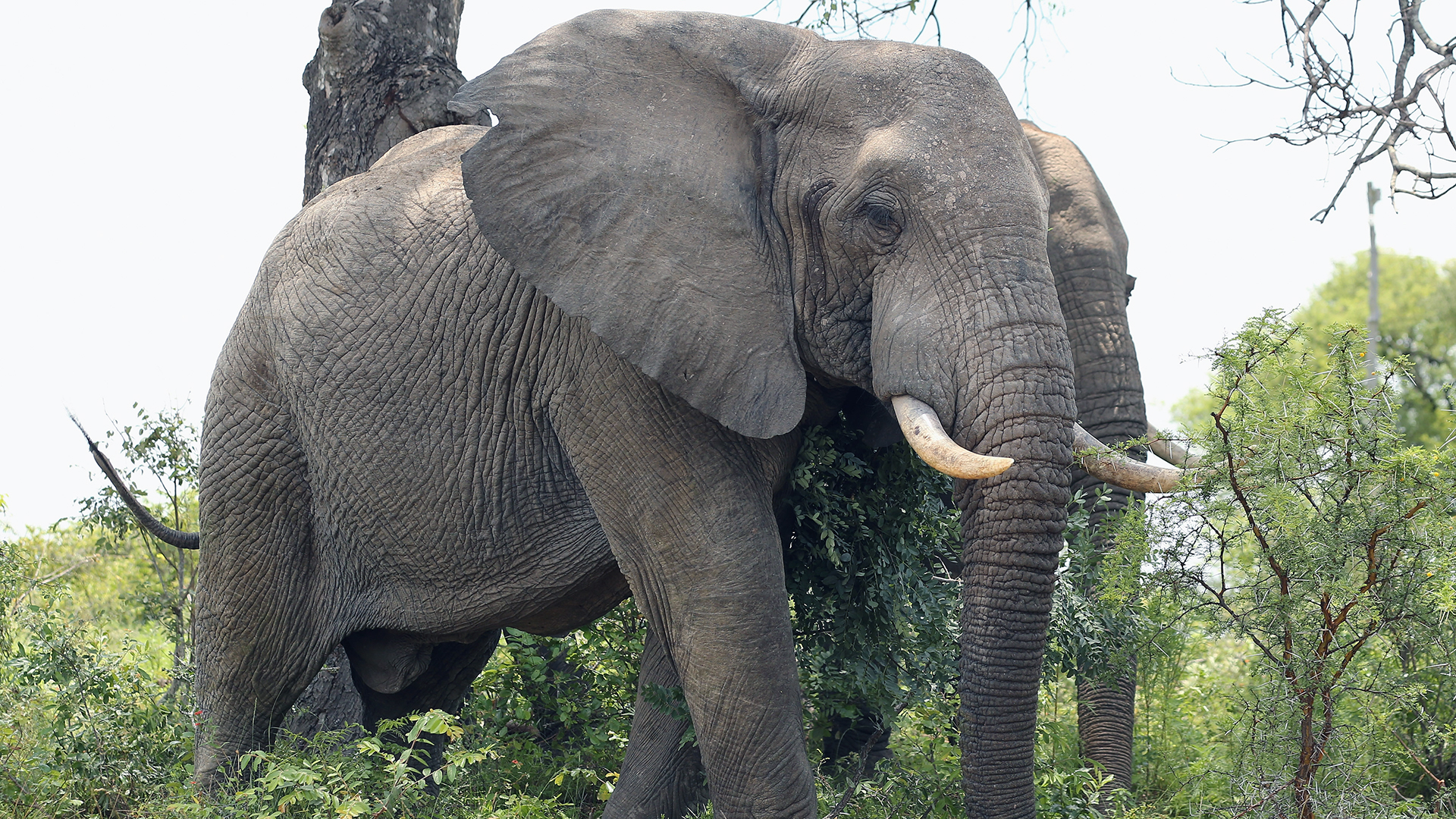 2 Elephants-159532.jpg37138216