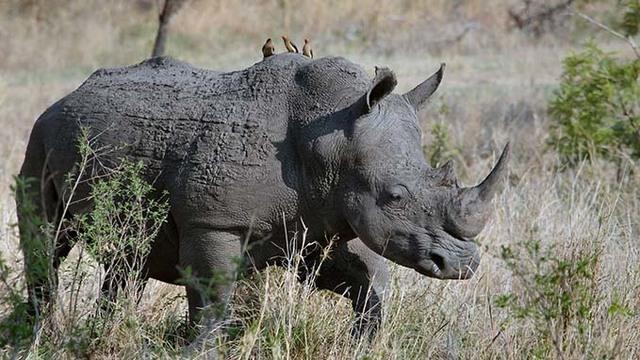 4-8 FILE Rhino_1554734577137.jpg_81182730_ver1.0_640_360_1554740067040.jpg.jpg