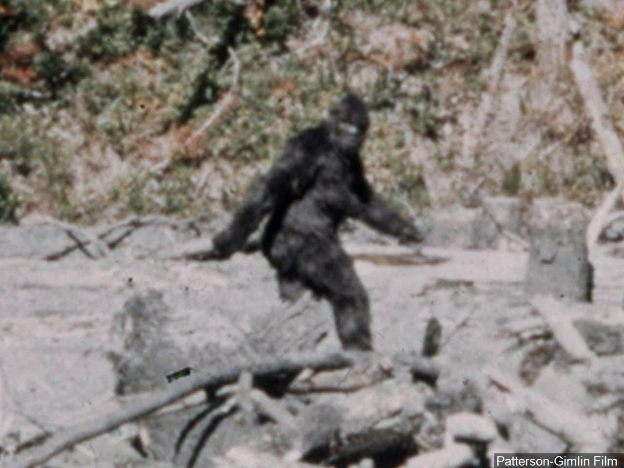Patterson Gimlin frame 352 Big Foot