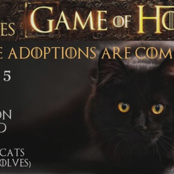 Free pet adoptions are coming this weekend at Miss Winkles 'Game of Homes'