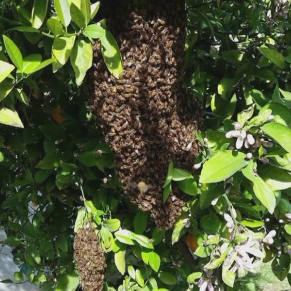Valley beekeepers busy this season