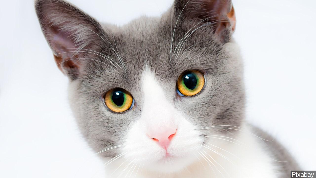 cat_1557594188014.jpg