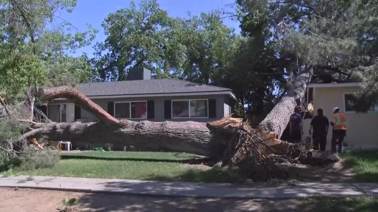 Massive pine tree crashes into three homes