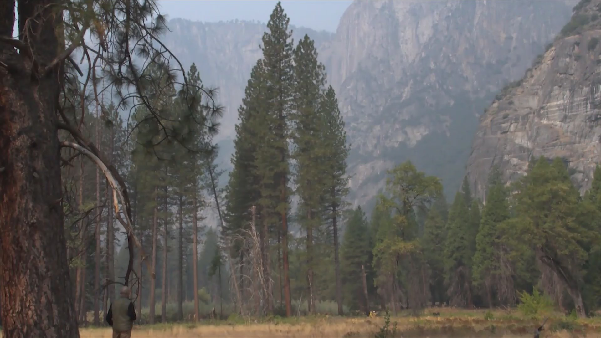 Yosemite celebrates 50 years of its prescribed burn program