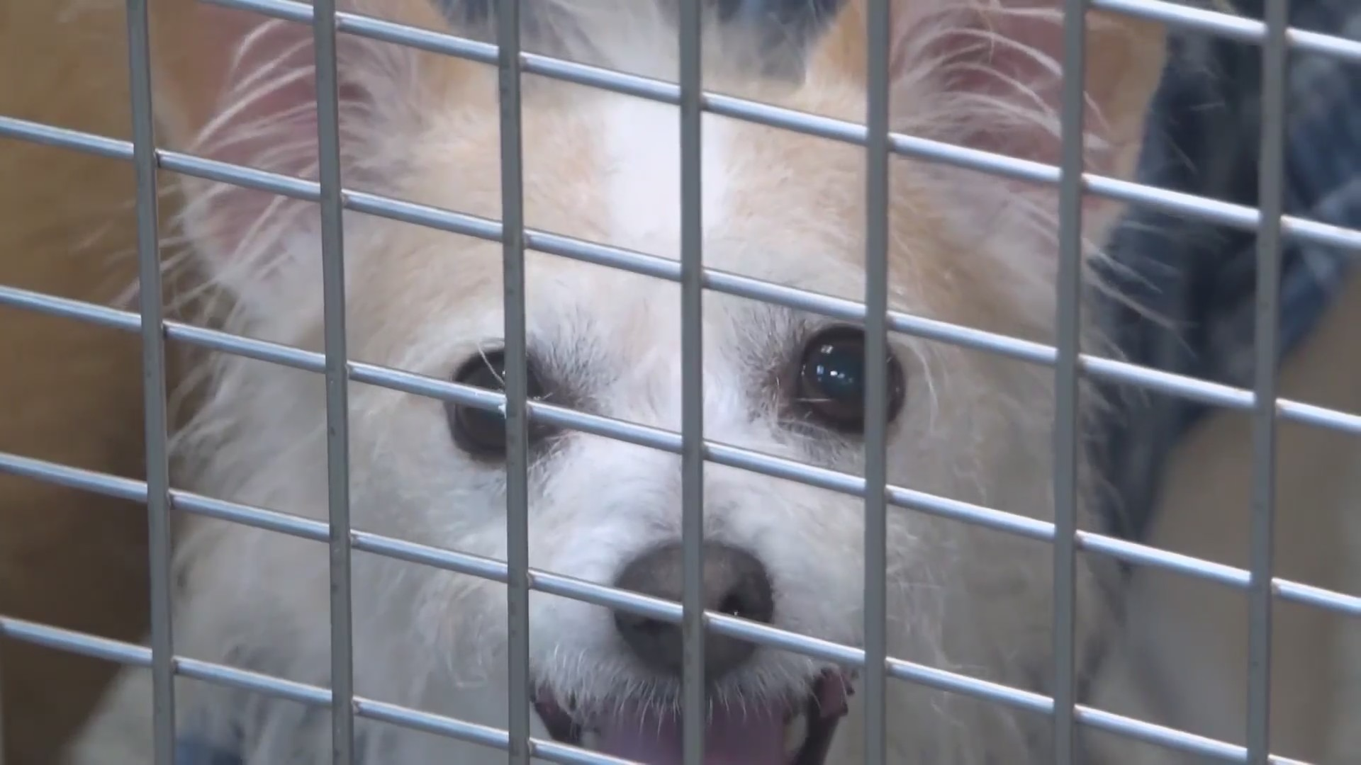 Local animal shelter getting ready for influx when eviction moratorium ends