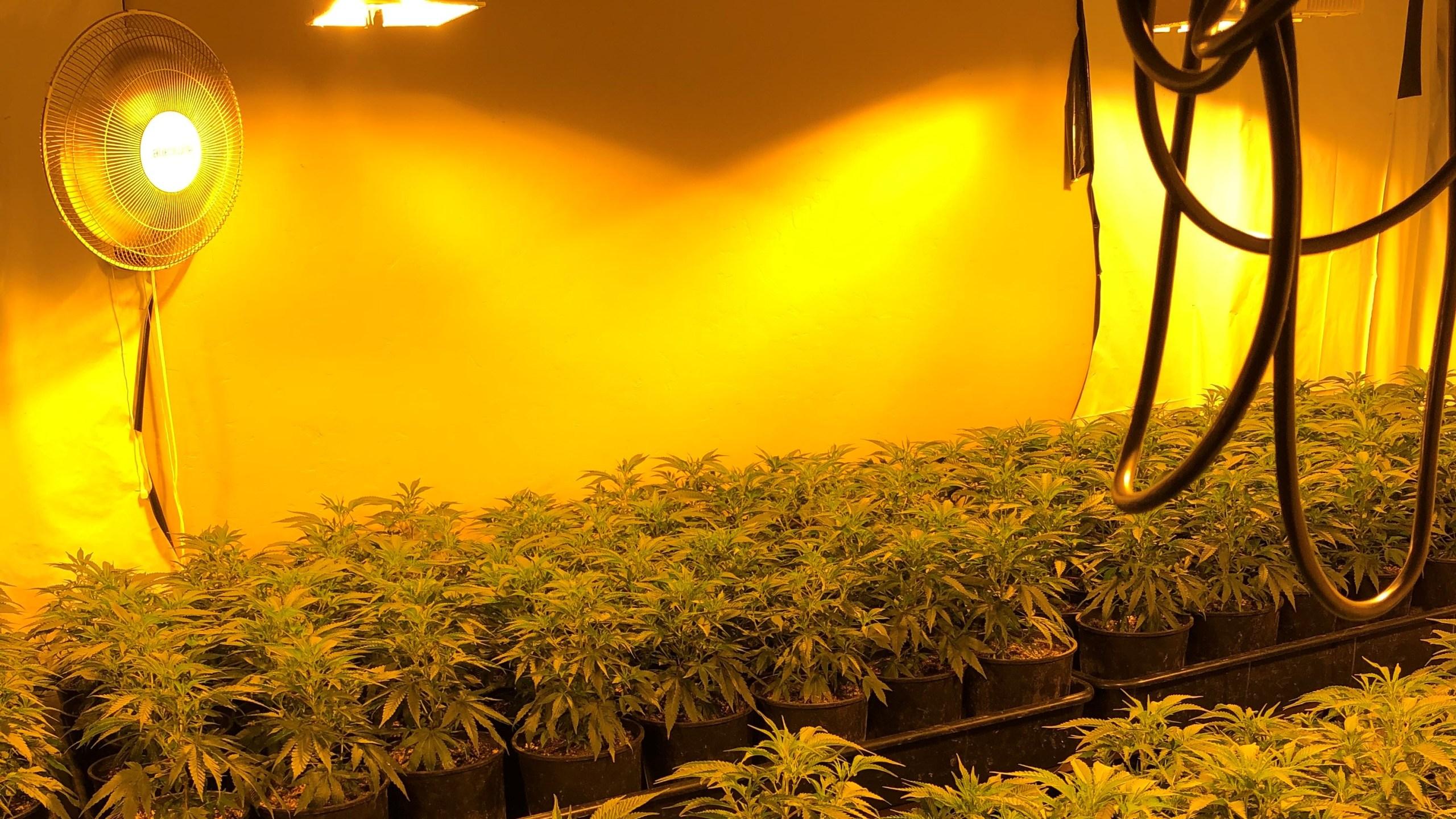 2,700 marijuana plants, illegal firearms, recovered inside Visalia homes