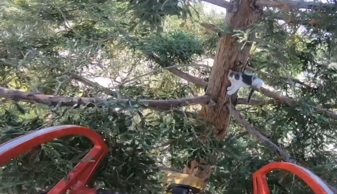 Cat rescued from Tower District tree by Fresno Fire