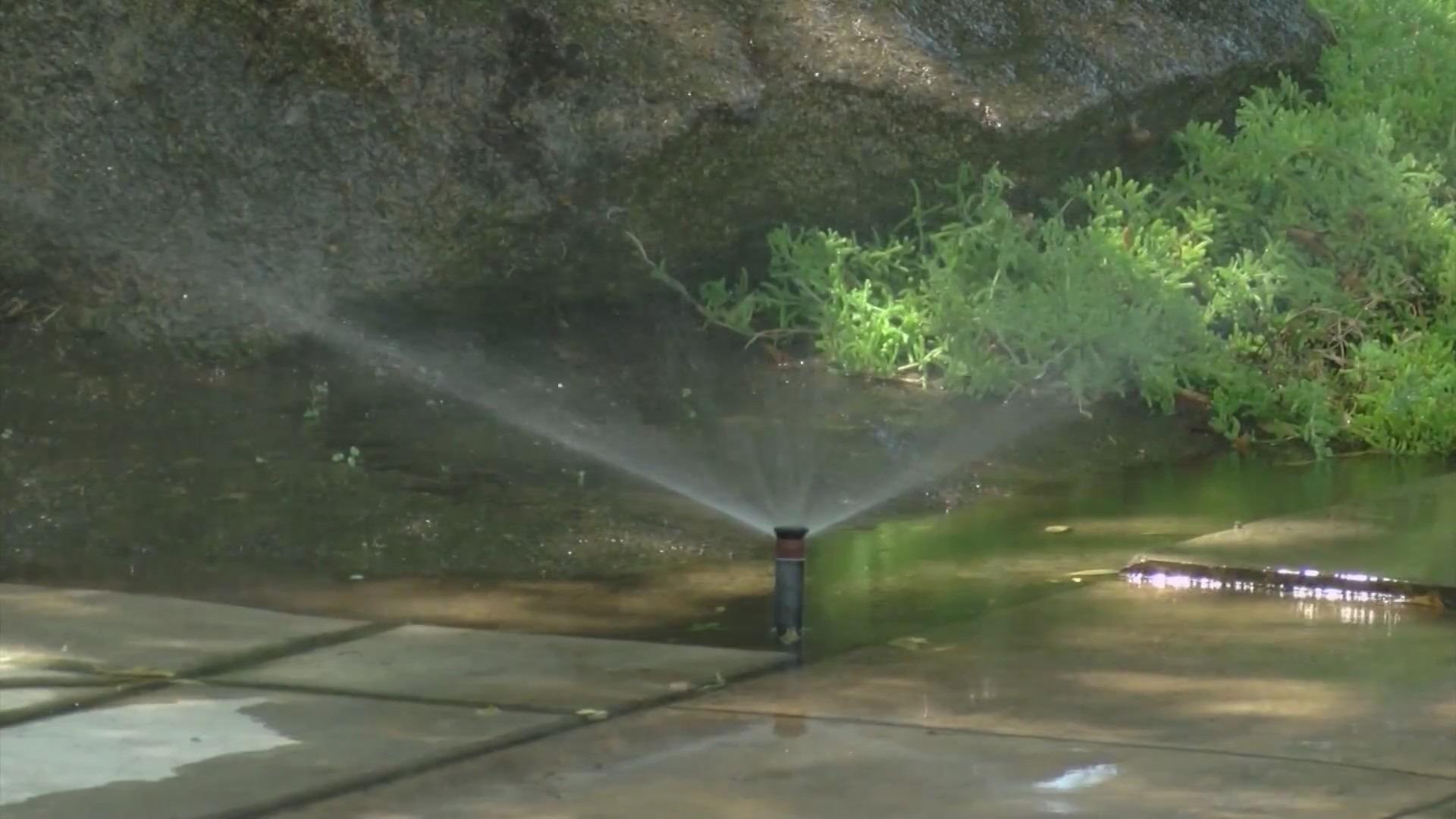 Sprinkler head spraying water on yard