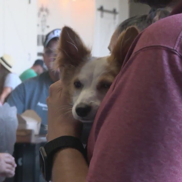 Beer and bowwow: Clovis brewery holds dog adoption event