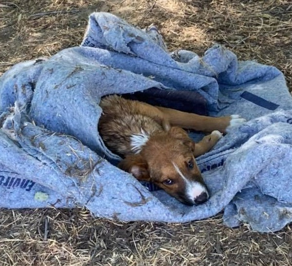 Drowning dog saved by fishermen in Kings County