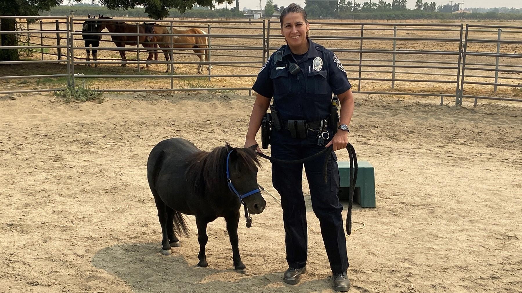 Mini horse has big dreams with Madera Police