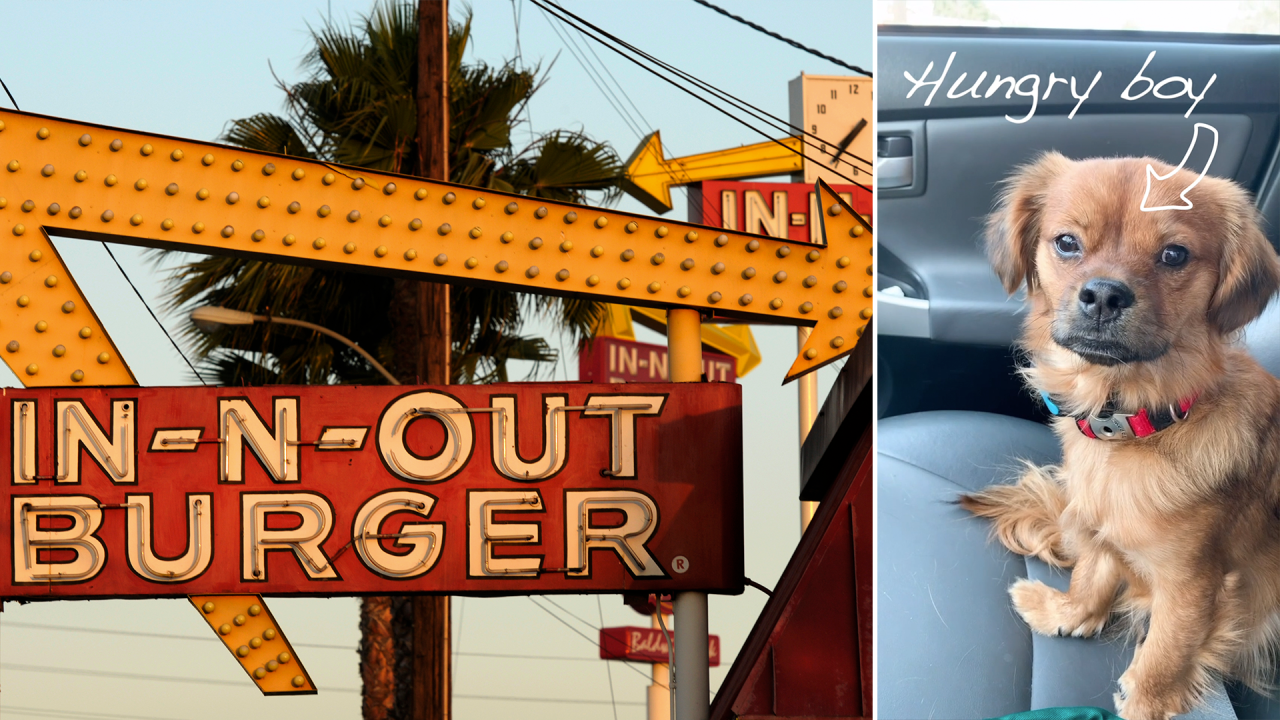 Do dogs eat for free at In-N-Out? A viral <b>TikTok</b> video has people wondering   YourCentralValley.com thumbnail